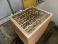 Gitter Bienen